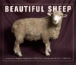 Beautiful Sheep: Portraits of Champion Breeds