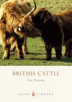 British Cattle by Val Porter
