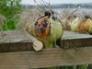 Onion drying rack