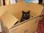 Cass in a box