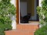 Homer enjoying the sun