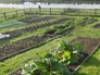 Raised beds in vegetable garden