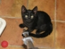 Bertie, 13 weeks old, July 2009