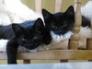 Bertie & Harry, 13 wks old, July 2009