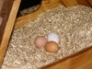 Trio of eggs in nestbox