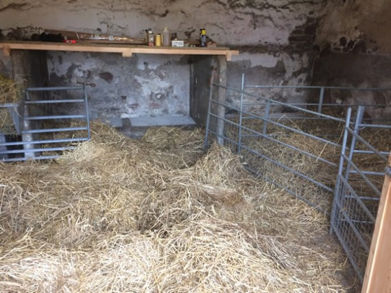 Byre for lambing