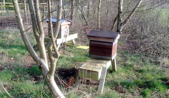 Apiary in March 2016