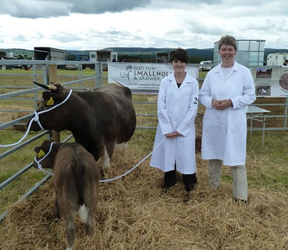 Before showing the Shetland Cattle