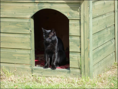 Bertie in cat's kennel
