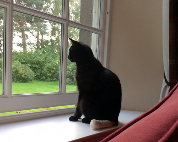 Bertie's stump