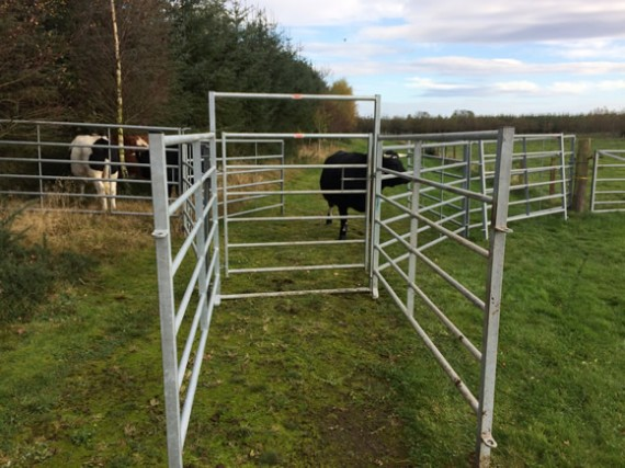 Cattle pen at Astwood
