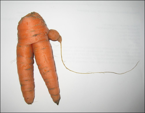 comedy carrot