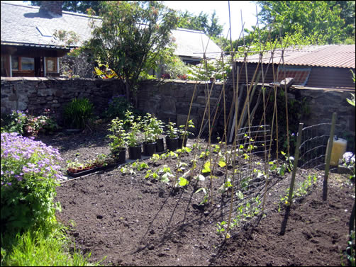 Dalmore temporary vegetable garden