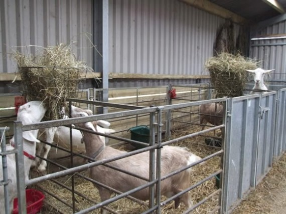 Goat Housing The Accidental Smallholder