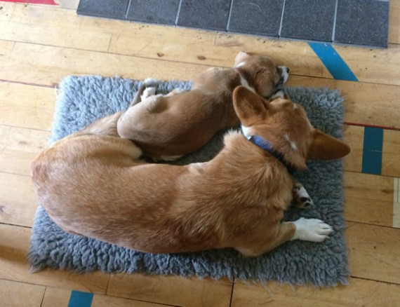 Bryn & Gwenna in front of the stove