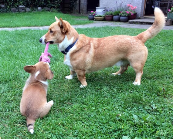 Bryn & Gwenna with Wubba