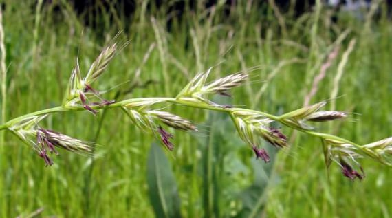 grass for soils