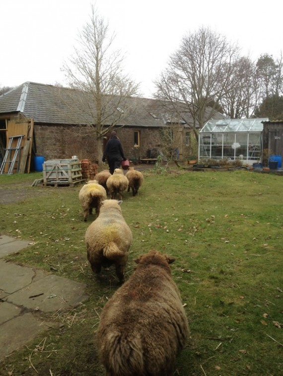 Moving the ewes