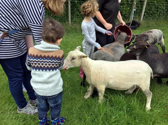 Open Farm Sunday - meeting the sheep
